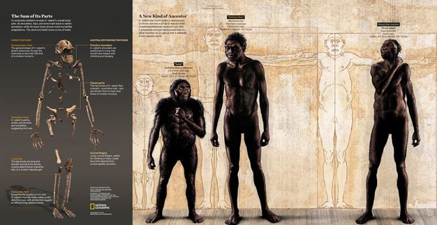 homo naledi body.2